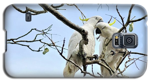 Sulphur Crested Cockatoos Galaxy S5 Case by Kaye Menner