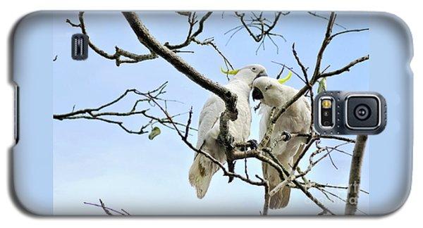 Sulphur Crested Cockatoos Galaxy S5 Case