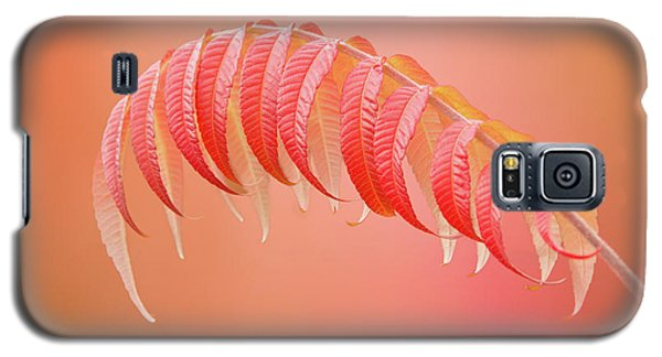 Sumac Branch Galaxy S5 Case