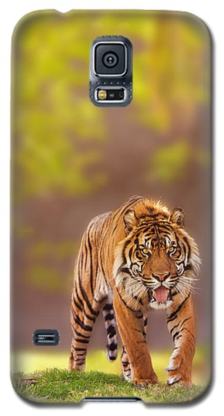 Sumatran Tiger Walking Forward Galaxy S5 Case