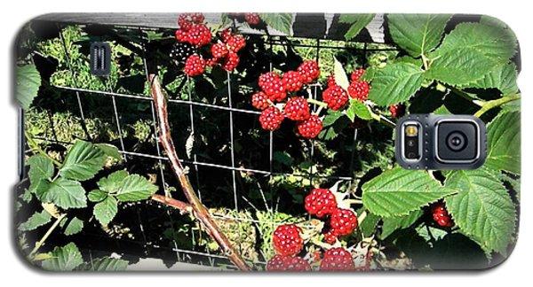 Summer Blackberries Galaxy S5 Case