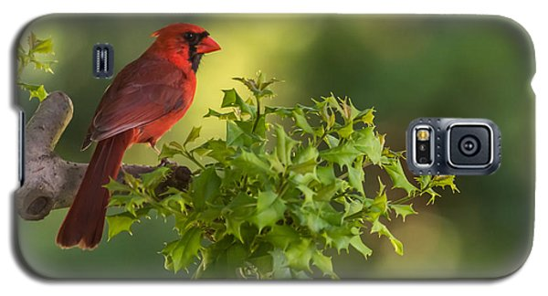 Summer Cardinal New Jersey Galaxy S5 Case