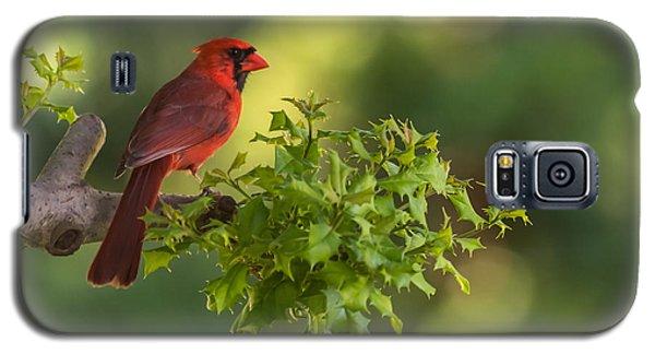 Summer Cardinal New Jersey Galaxy S5 Case