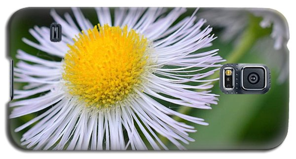 Summer Flower Galaxy S5 Case