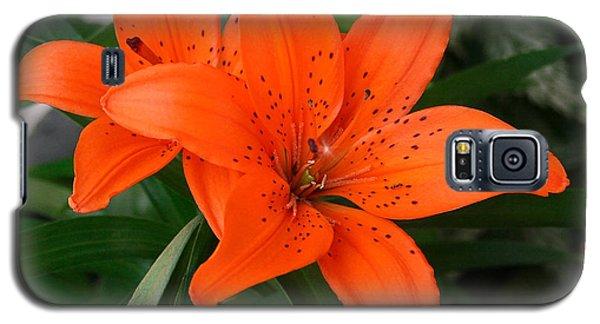 Summer Flower Galaxy S5 Case