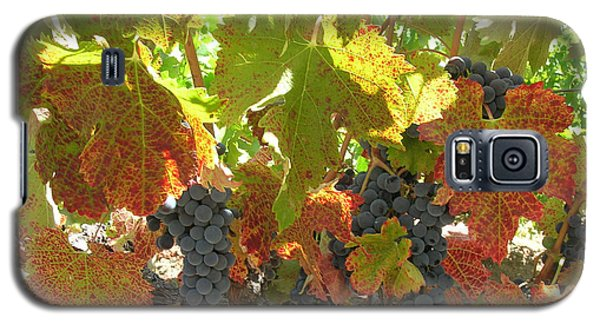 Galaxy S5 Case featuring the photograph Summer Grapes by Bonnie Muir