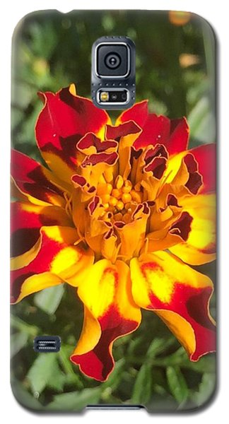 Summer Marigold Galaxy S5 Case