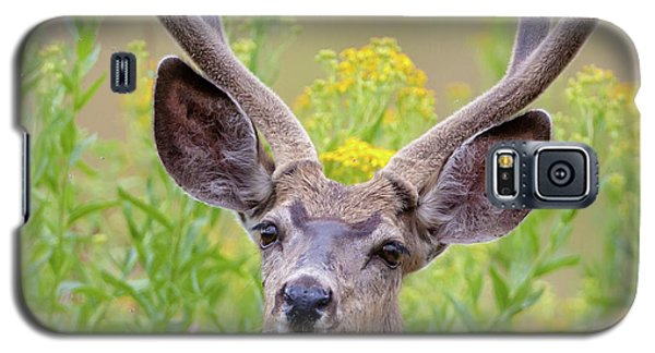 Summer Mule Deer Galaxy S5 Case by Jack Bell