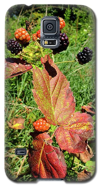 Galaxy S5 Case featuring the photograph Summer Remnants by Scott Kingery