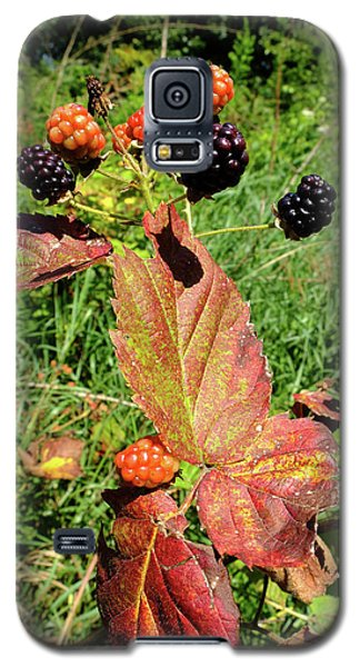 Summer Remnants Galaxy S5 Case by Scott Kingery