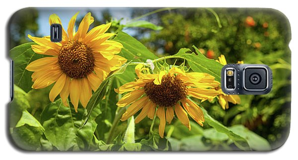 Summer Sunflowers Galaxy S5 Case