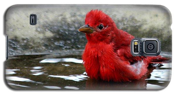 Summer Tanager In Bird Bath Galaxy S5 Case