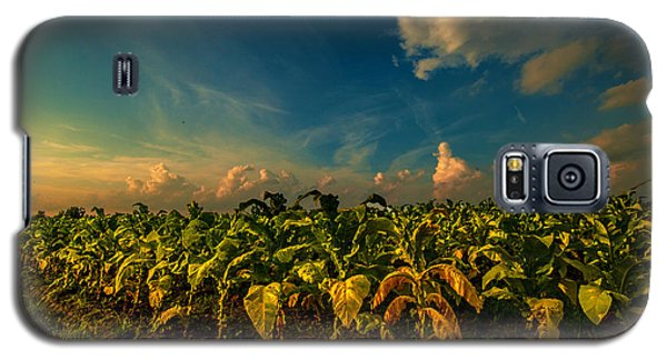 Galaxy S5 Case featuring the photograph Summer Tobacco  by John Harding