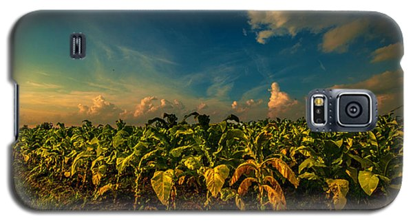 Summer Tobacco  Galaxy S5 Case by John Harding