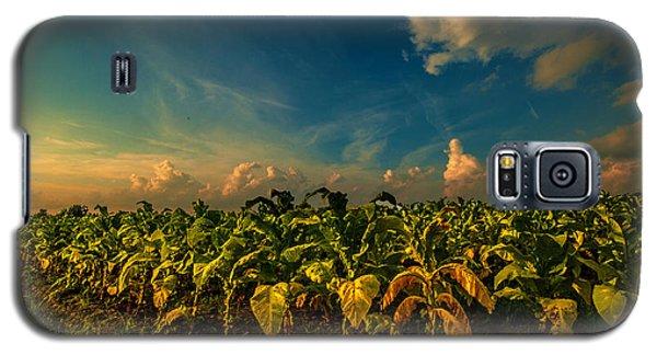 Summer Tobacco  Galaxy S5 Case