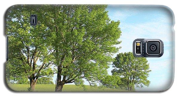 Summer Trees Galaxy S5 Case