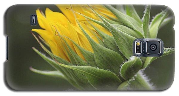 Summer's Promise - Sunflower Galaxy S5 Case