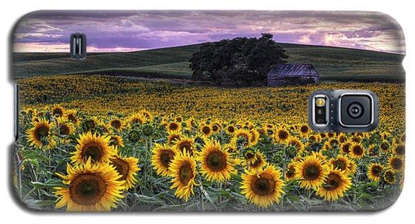 Summertime Sunflowers Galaxy S5 Case