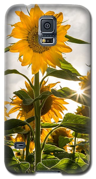 Sun And Sunflowers Galaxy S5 Case