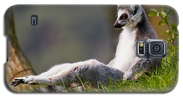 Galaxy S5 Case featuring the photograph Sun Bathing Ring-tailed Lemur  by Nick  Biemans
