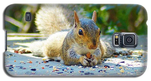 Sun Bathing Squirrel Galaxy S5 Case