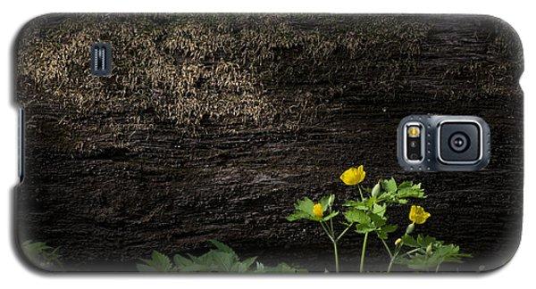 Sun Beam On Log Galaxy S5 Case