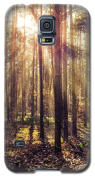 Sun Beams In The Autumn Forest Galaxy S5 Case