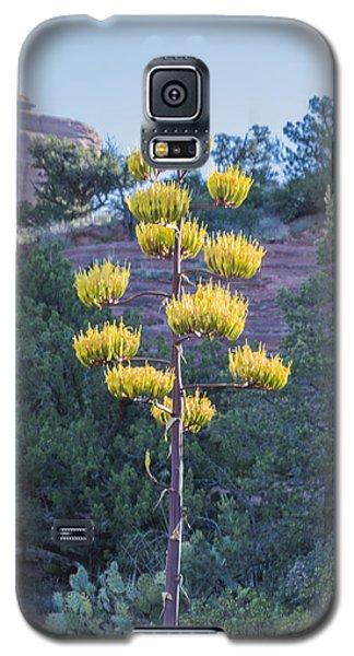 Galaxy S5 Case featuring the photograph Sun Brightened Century Plant by Laura Pratt