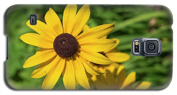 Sun Drenched Daisy Galaxy S5 Case