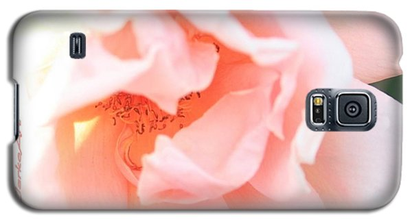 Sun-drenched Rose Galaxy S5 Case