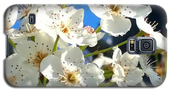 #sun Drenched #tree #blossoms So Sweet Galaxy S5 Case by Shari Warren