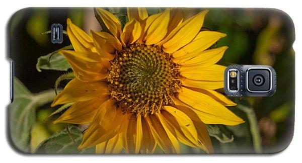 Galaxy S5 Case featuring the photograph Sun Flower by Lynn Hughes