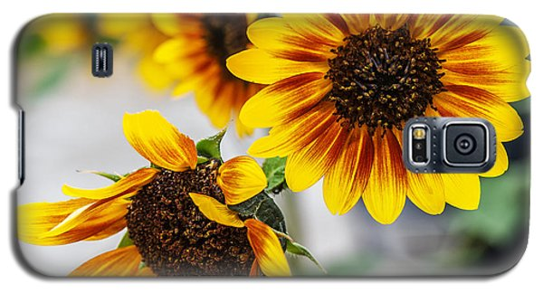 Galaxy S5 Case featuring the photograph Sun Flowers In Bloom by Edward Peterson