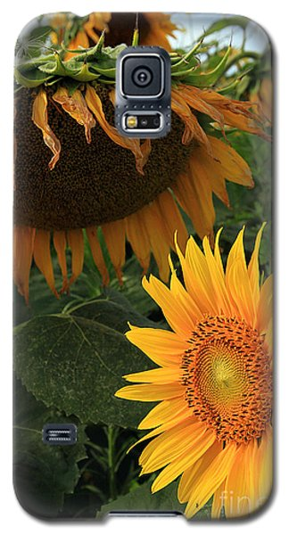 Galaxy S5 Case featuring the photograph Sun Flowers  Past  And  Present  by Paula Guttilla