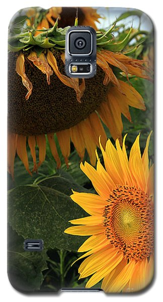 Sun Flowers  Past  And  Present  Galaxy S5 Case by Paula Guttilla