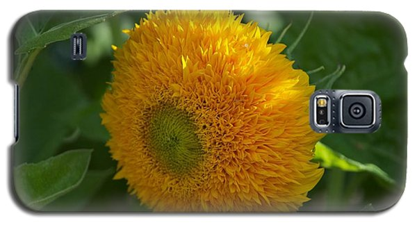 Galaxy S5 Case featuring the photograph Sun by Joseph Yarbrough