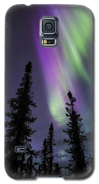 Sun-kissed Aurora Above The Spruces Galaxy S5 Case