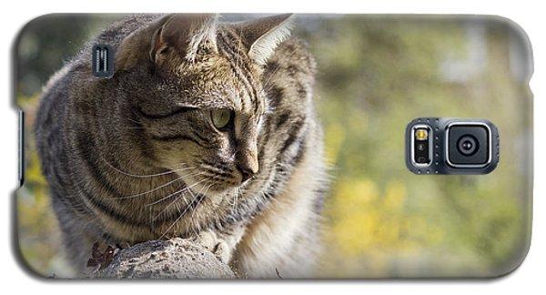 Sun-kissed Galaxy S5 Case