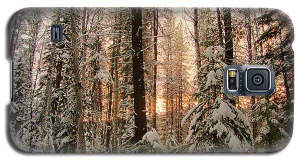 Sun Of Winter Trees Galaxy S5 Case