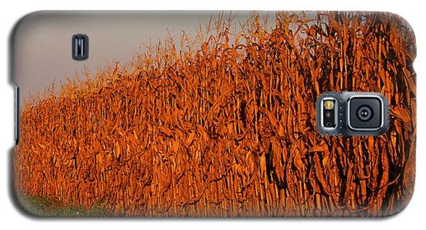 Sun-painted Cornfield Galaxy S5 Case