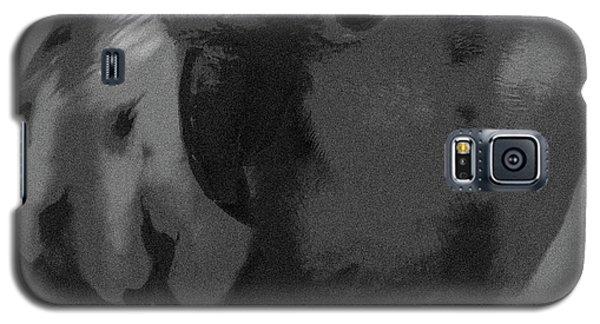 Sun Parakeet  Galaxy S5 Case