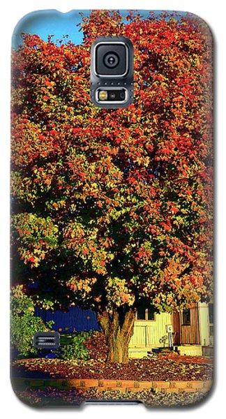 Sun-shining Autumn Galaxy S5 Case