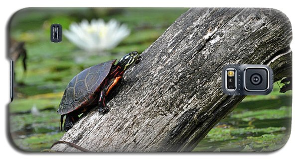 Galaxy S5 Case featuring the photograph Turtle Sunbathing by Glenn Gordon