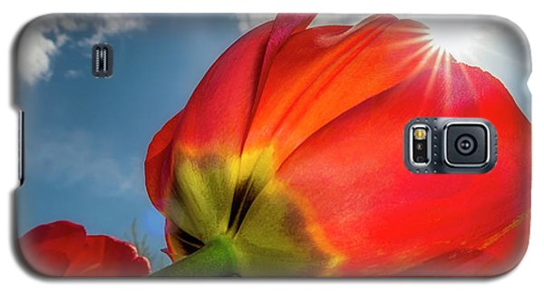 Galaxy S5 Case featuring the photograph Sunbeams And Tulips by Adam Romanowicz