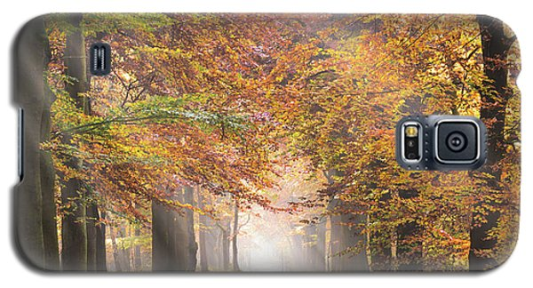 Sunbeams In A Forest In Autumn Galaxy S5 Case
