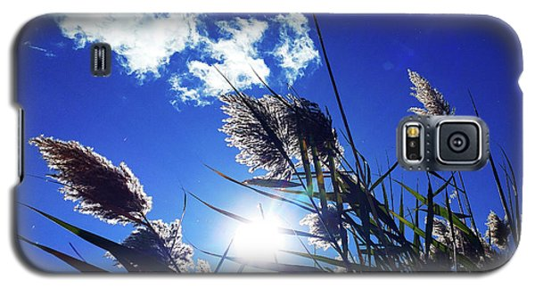 Sunburst Reeds Galaxy S5 Case