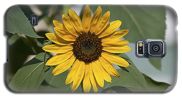 Galaxy S5 Case featuring the photograph Sunflower 20120718_06a by Tina Hopkins