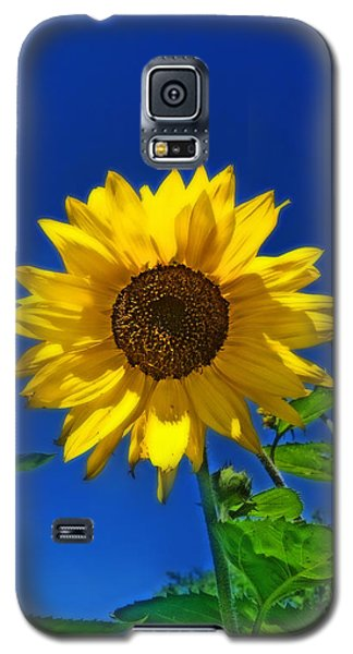 Maize 'n Blue Galaxy S5 Case
