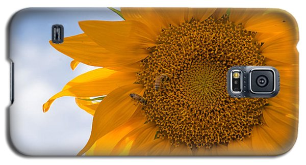 Sunflower And The Bee  Galaxy S5 Case