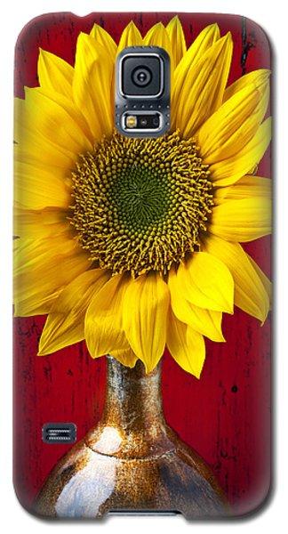 Sunflower Close Up Galaxy S5 Case